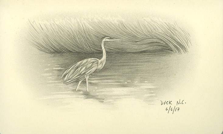 W_Duck_1