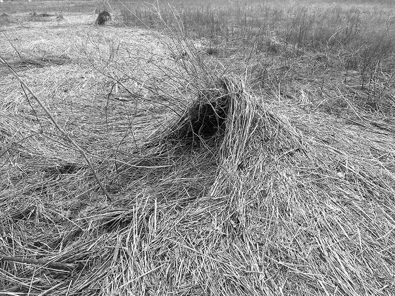 ARMLEDER_GRASS_LO_REZ